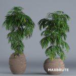 cây 3dmax trang trí #11 – Maxbrute Furniture