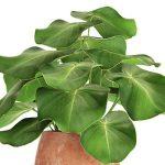 Plant  cây 663