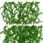 Plant  cây 332