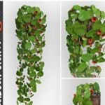 Plant 3dskymodel -Download 3dmodel- Free 3d Models   341