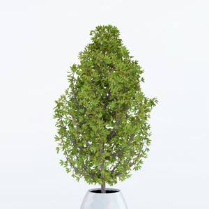 Plant 3dskymodel -Download 3dmodel- Free 3d Models   448