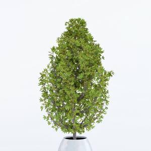 Plant  cây 448