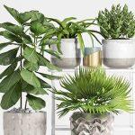 Plant  cây 539