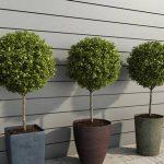 Plant  cây 673