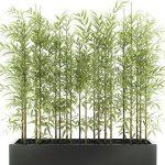Plant  cây 678
