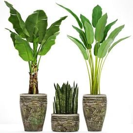 Collection of plants in pots 37 3d model Download Maxbrute Furniture Visualization
